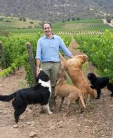 Operazioni biodinamiche: in Cile sta emergendo una nuova generazione di produttori di vino dinamici, come la Koyle, a conduzione familiare.  Qui rappresentato è Cristóbal, meglio conosciuto come Toti, il primo enologo nelle cinque generazioni della famiglia Undurraga che gestiva il vigneto.  Foto: Svein Lindin / Finansavisen