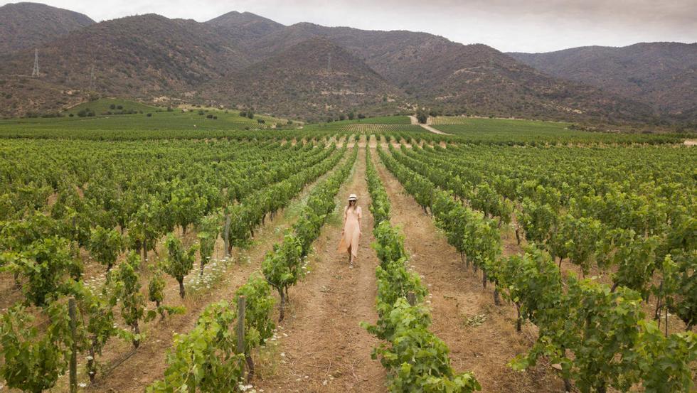 Vines on Vines: Le regioni vinicole del Cile offrono una varietà di vigneti di ispirazione coloniale circondati, da tutte le angolazioni, dalle linee perfette delle viti.  Fate un giro con un tradizionale cavallo e carretto per vedere la fabbrica che ci regala le preziose gocce.  Foto: Svein Lindin / Finansavisen