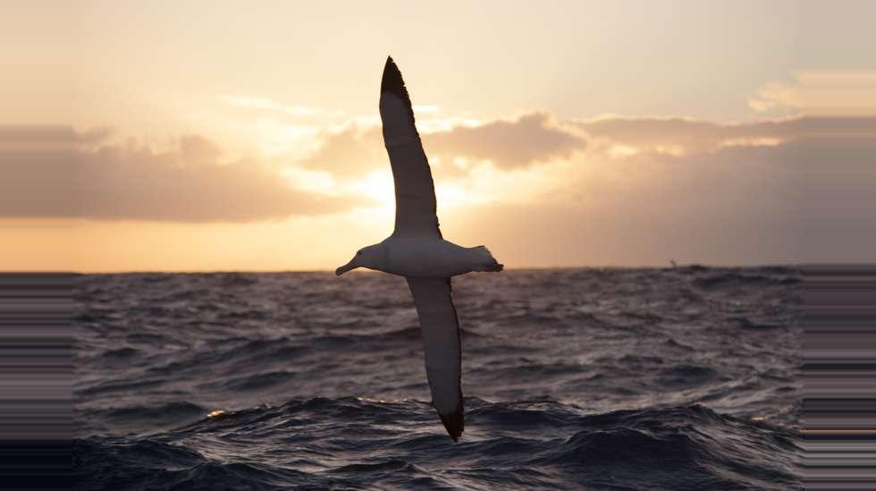 verdens største fugl som kan fly