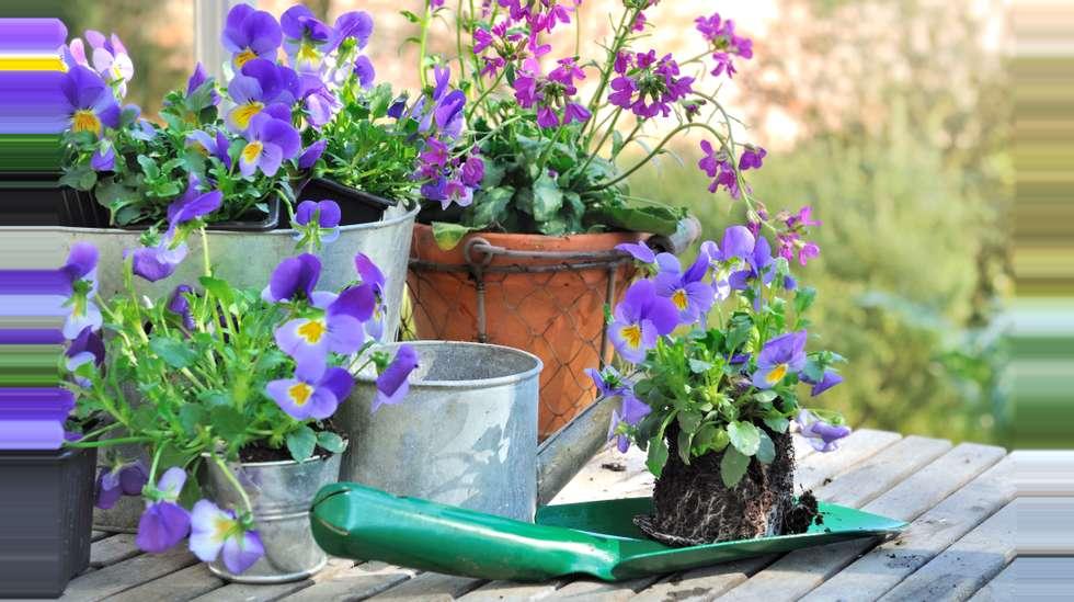 a74effe73 Tipsene for å lykkes med planting i krukker og potter | ABC Nyheter