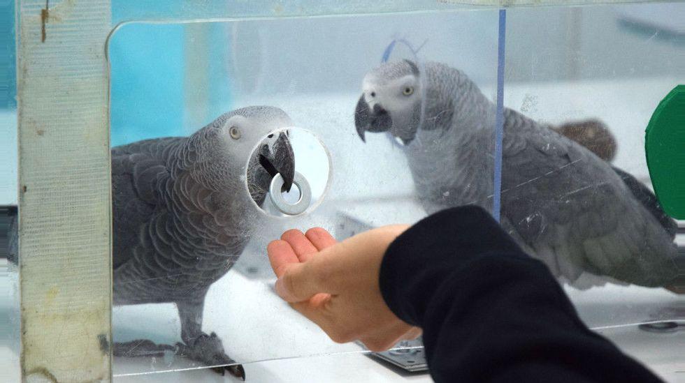 Anerkjent forsker tiltalt for dyremishandling | ABC Nyheter