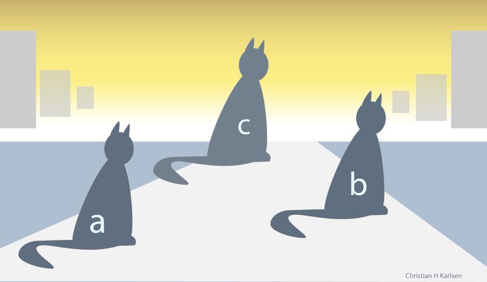 Hvilken katt er størst, A, B eller C?