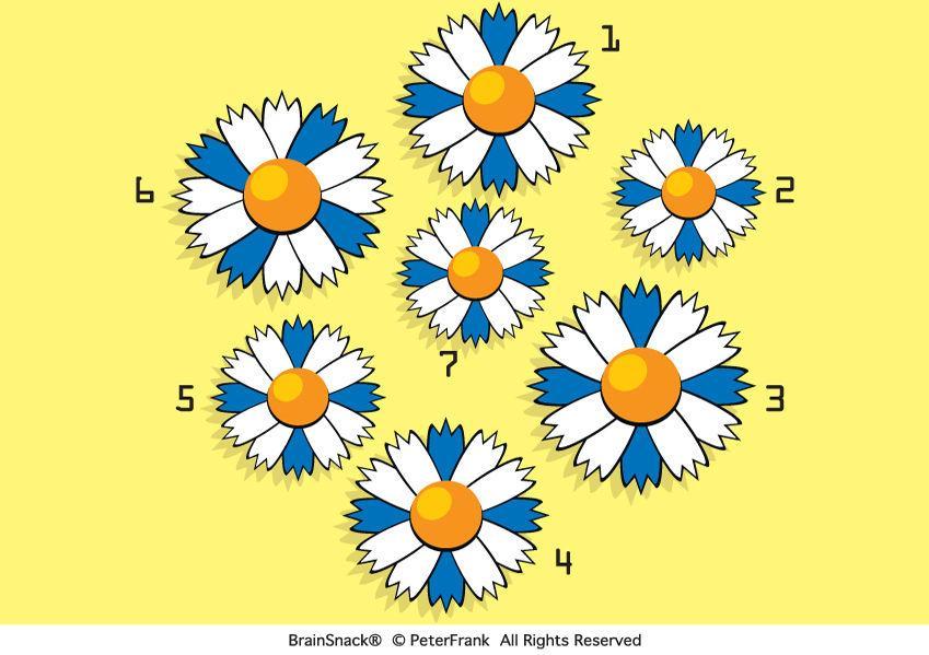Hvilken blomst skiller seg ut?