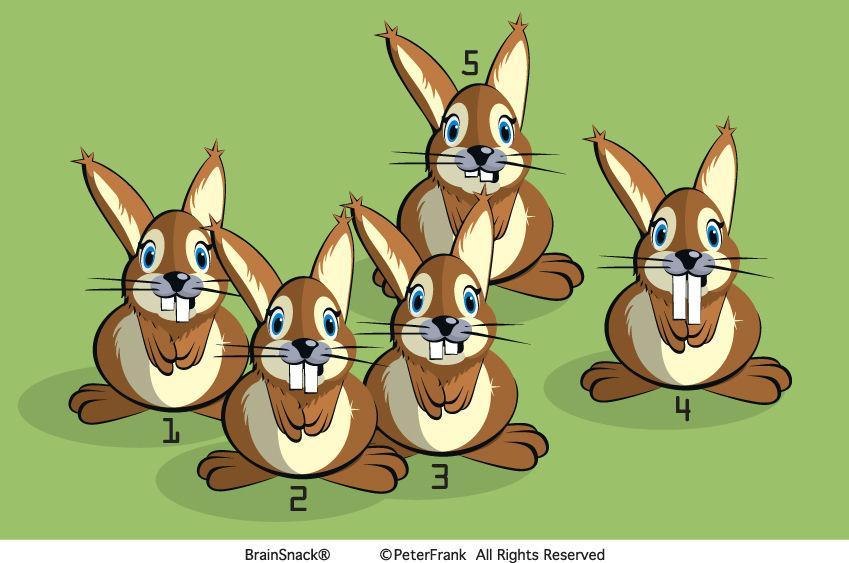 Hvilken kanin er ikke i familie?