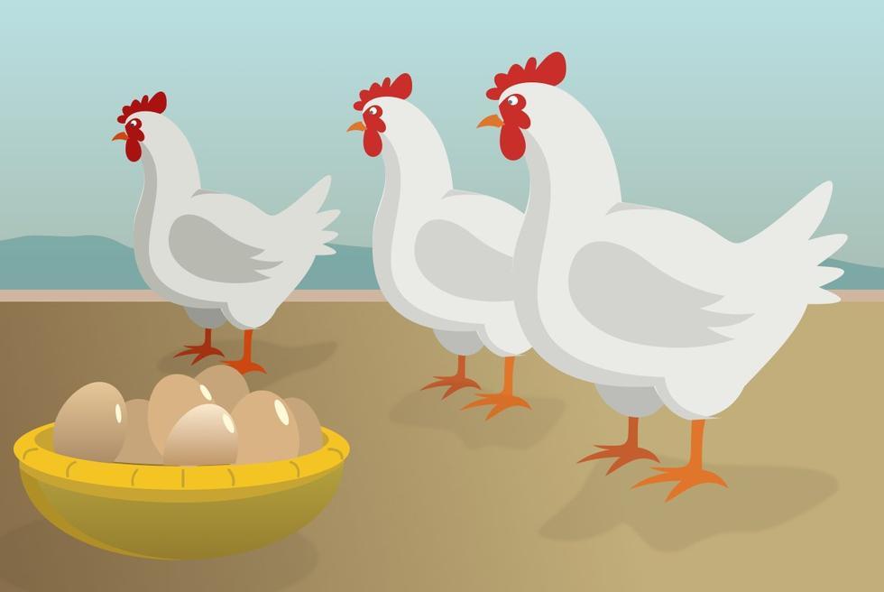 Hvor mange egg legger hønene?