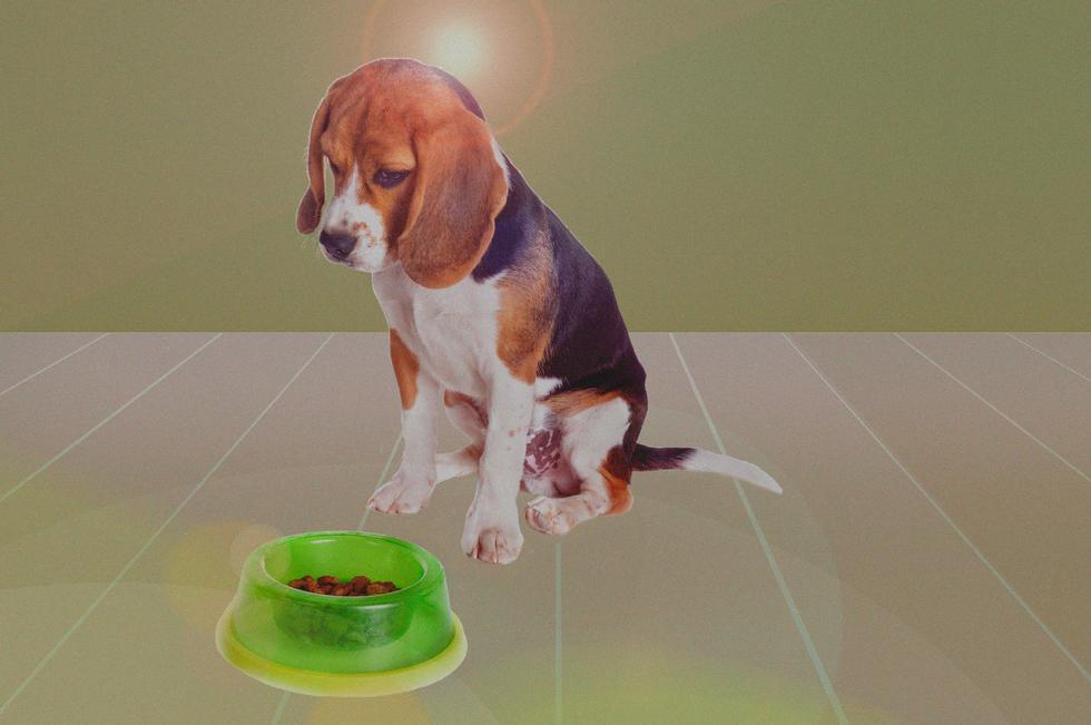 Hvor lang tid bruker valpen på å spise 1000 bokser hundemat?
