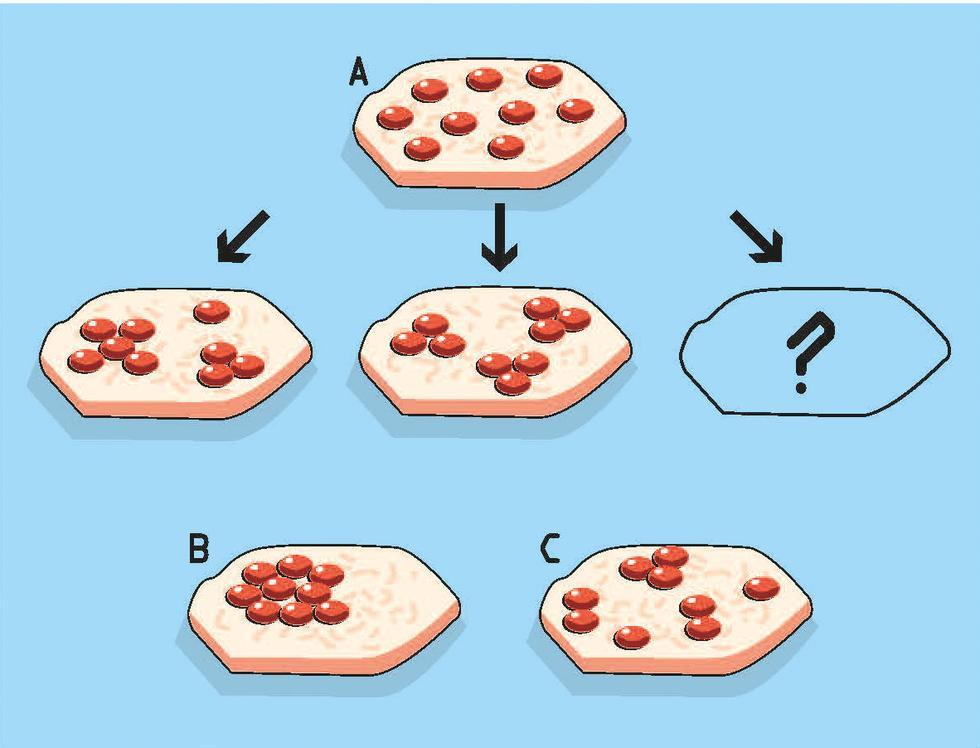 Hva blir neste genmanipulasjon?