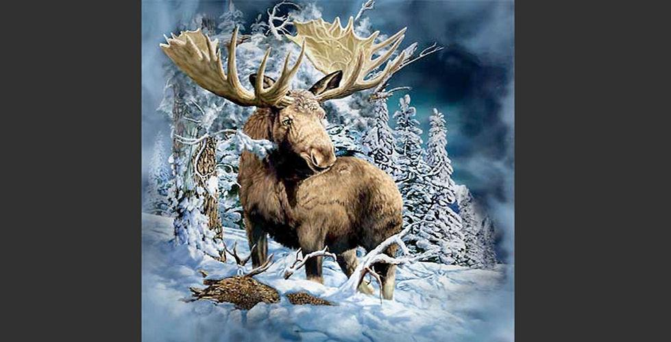 Ser du alle elgene på bildet?