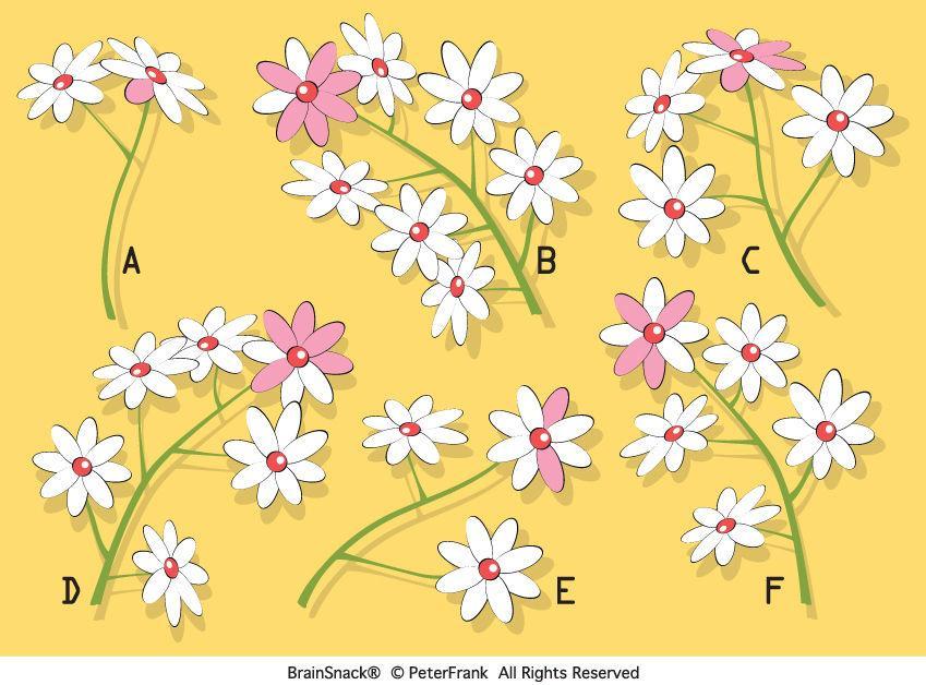 Hvilken blomsterkvist skiller seg ut?
