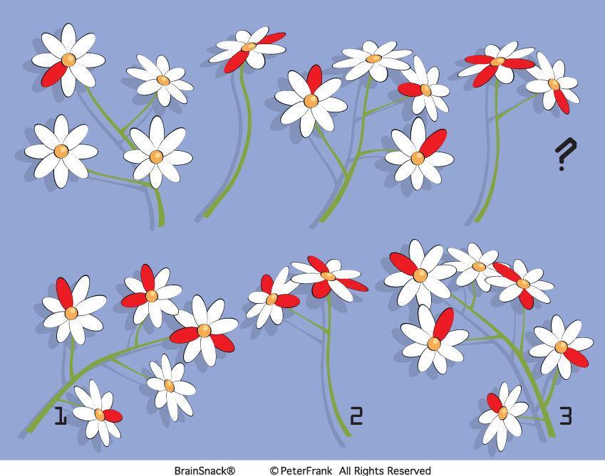 Finner du riktig rekkefølge på blomstene?