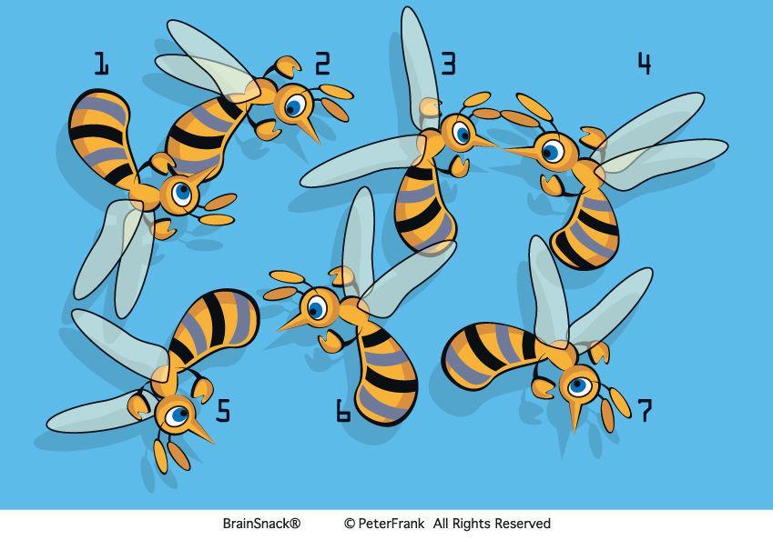 Hvilken bie skiller seg ut?