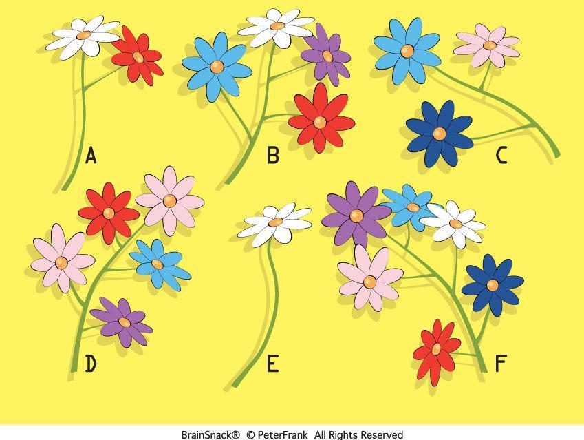 Hvilken blomsterkvist passer ikke inn?