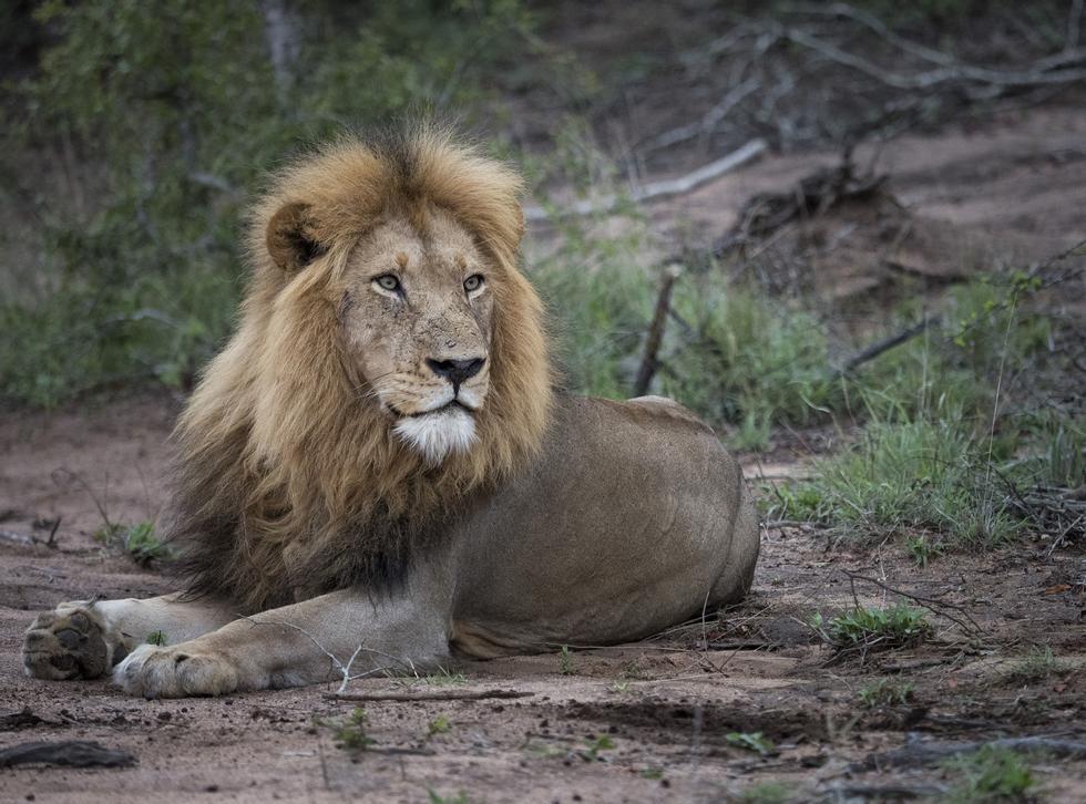 2083201c Bjørns fototips: Slik får du bedre bilder på safari | ABC Nyheter